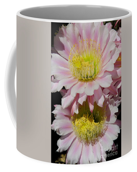 Pink Coffee Mug featuring the photograph Pink Cactus Flowers by Jim And Emily Bush