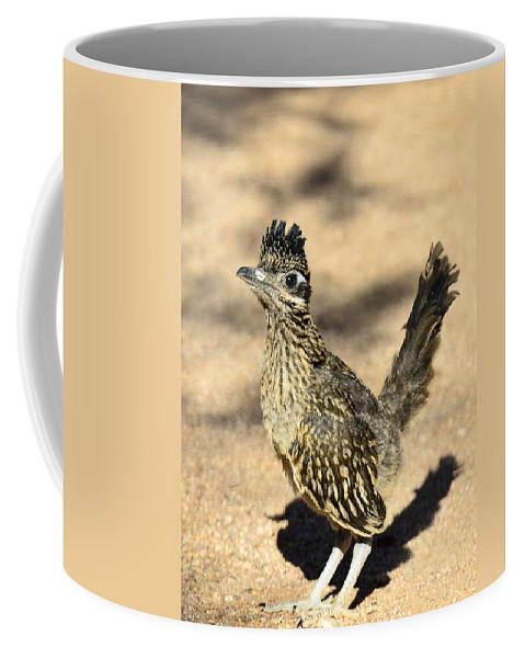 Greater Roadrunner Coffee Mug featuring the photograph A Baby Roadrunner by Saija Lehtonen