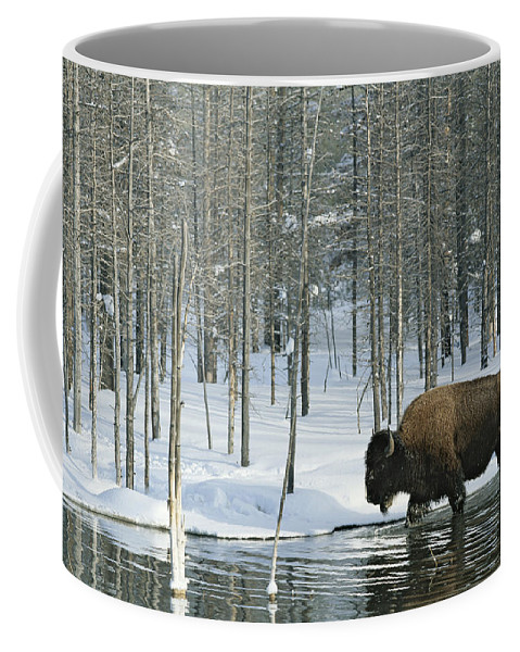 Animals Coffee Mug featuring the photograph A Bison Stands In A Cold Stream by Norbert Rosing