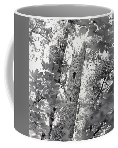 Forests And Forestry Coffee Mug featuring the photograph A Black And White View Of The Interior by Sam Kittner