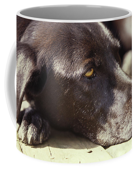 North America Coffee Mug featuring the photograph A Black Lab Lounges In The Afternoon by Stacy Gold