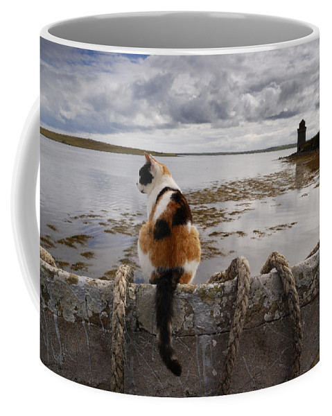 Scotland Coffee Mug featuring the photograph A Cat Is Perched On A Wall, Overlooking by Jim Richardson