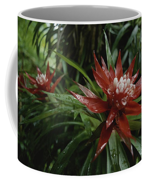 Atlantic Islands Coffee Mug featuring the photograph A Close View Of A Tropical, Red Flower by Michael Melford