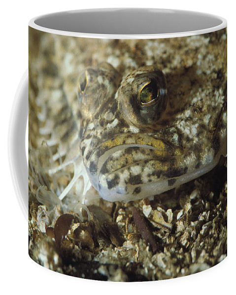 North America Coffee Mug featuring the photograph A Close View Of A Well-camouflaged by Bill Curtsinger