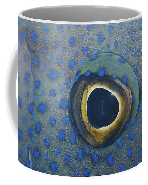 Australia Coffee Mug featuring the photograph A Close View Of The Eye And Skin by Jason Edwards