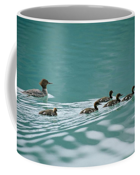 North America Coffee Mug featuring the photograph A Family Of Merganser Ducks Swim by Michael Melford