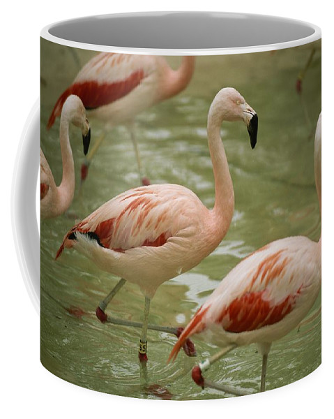 North America Coffee Mug featuring the photograph A Flock Of Chilean Flamingos Wading by Joel Sartore