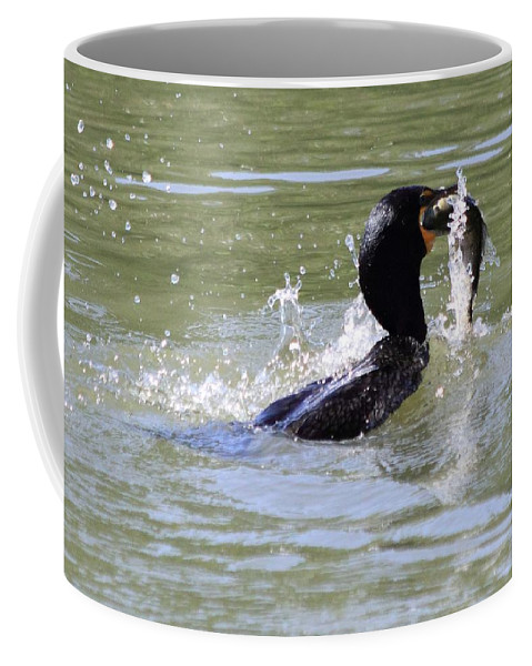Cormorant Coffee Mug featuring the photograph A Fresh Meal by Shane Bechler