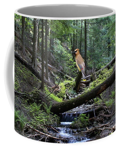 Cedar Waxwing Coffee Mug featuring the photograph A Giant Cedar Waxwing On Mt Spokane by Ben Upham III
