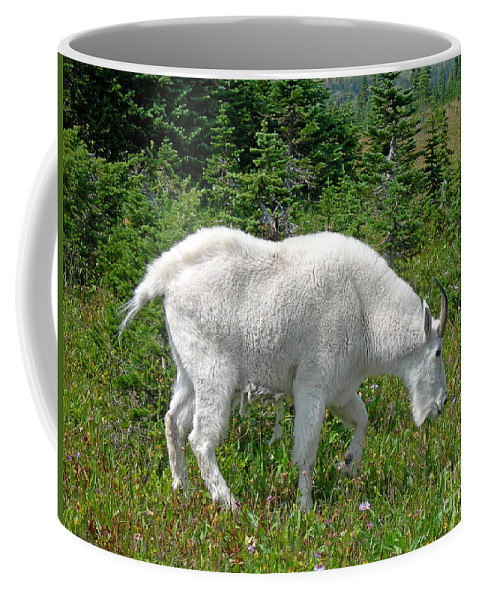 Scenic Coffee Mug featuring the photograph A Goat In The Meadow by Jim Chamberlain