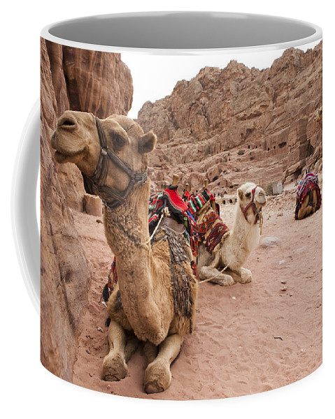 Petra Coffee Mug featuring the photograph A Group Of Camels Sit Patiently by Taylor S. Kennedy