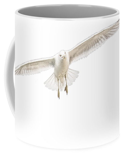 Art Coffee Mug featuring the photograph A Gull In Flight No. 2529 by Randall Nyhof