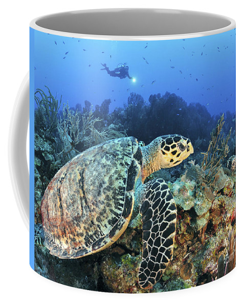 Coral Coffee Mug featuring the photograph A Hawksbill Turtle Swims by Karen Doody