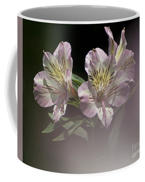 Nature Coffee Mug featuring the photograph A Hint Of Rose by Heiko Koehrer-Wagner