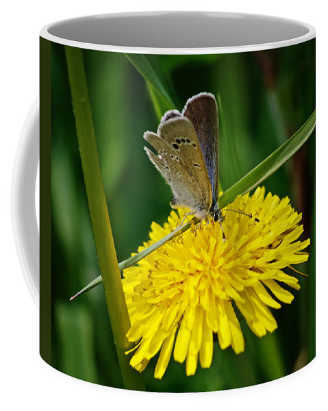 Butterfly Coffee Mug featuring the photograph A Little Blue by Susan Capuano