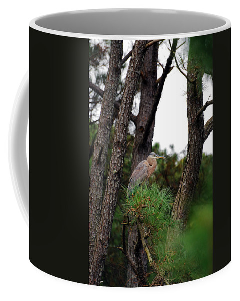 Blue Heron Coffee Mug featuring the photograph A Lucky Find by Lori Tambakis