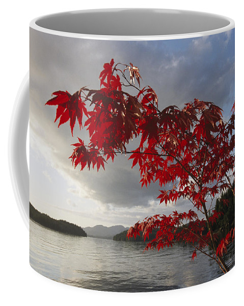 North America Coffee Mug featuring the photograph A Maple Tree In Fall Foliage Frames by Richard Nowitz