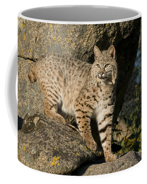 Bronstein Coffee Mug featuring the photograph A Moment Of Observation by Sandra Bronstein