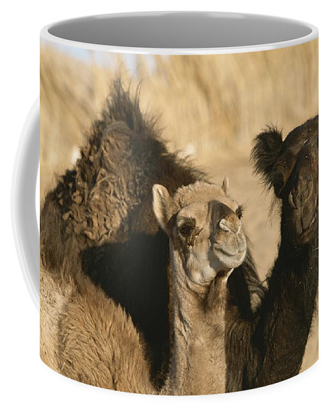 Animals Coffee Mug featuring the photograph A Pair Of Dromedary Camels Pose Proudly by Carsten Peter