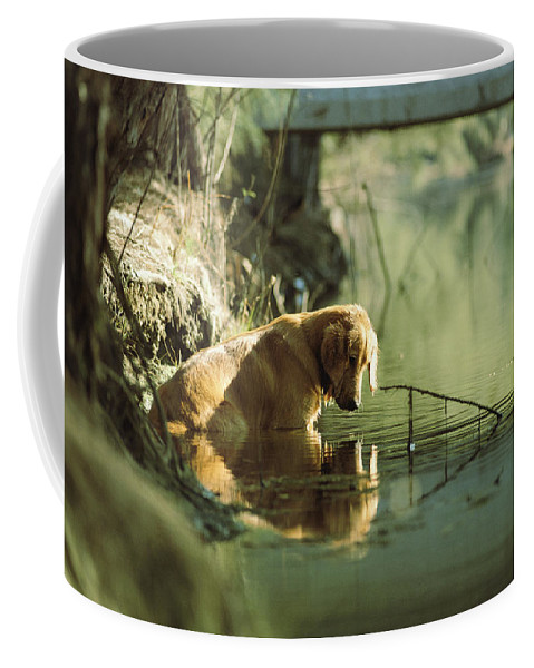 Animals Coffee Mug featuring the photograph A Pet Dog Sits In The Shallow Water by Bill Curtsinger