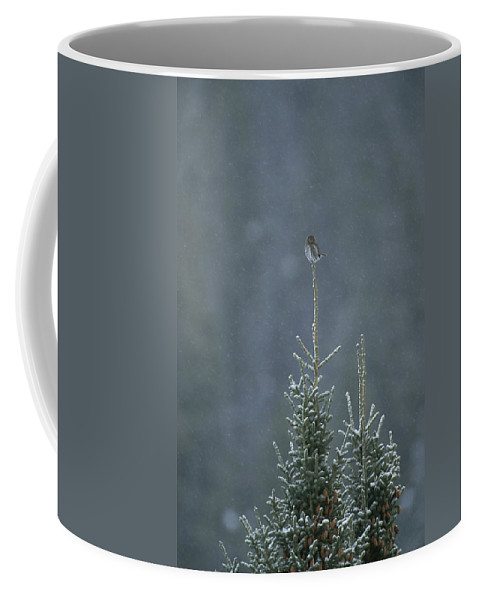 United States Of America Coffee Mug featuring the photograph A Pygmy Owl Perched In The Top Of An by Tom Murphy