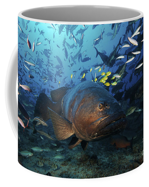 Giant Trevally Coffee Mug featuring the photograph A School Of Golden Trevally Follow by Terry Moore