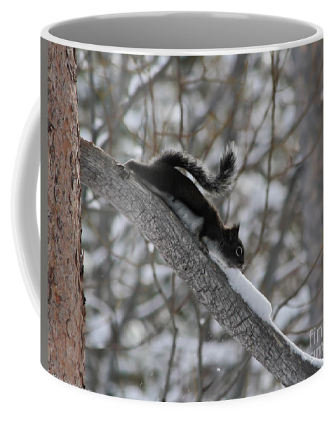 Squirrel Coffee Mug featuring the photograph A Squirrel Snow Cone by Mitch Shindelbower