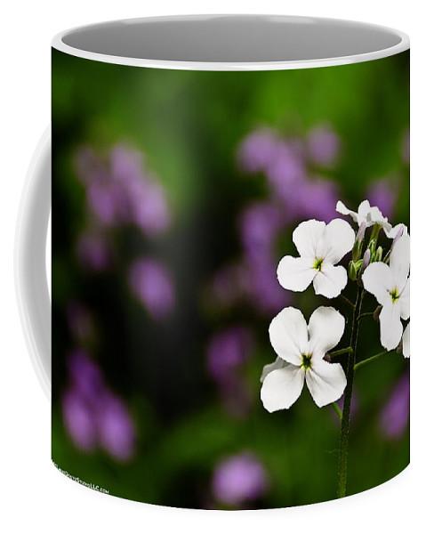 Usa Coffee Mug featuring the photograph A Star Is Born by LeeAnn McLaneGoetz McLaneGoetzStudioLLCcom