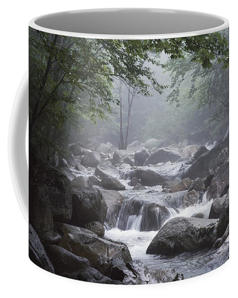 Baxter State Park Coffee Mug featuring the photograph A Stream Courses Through An by Phil Schermeister