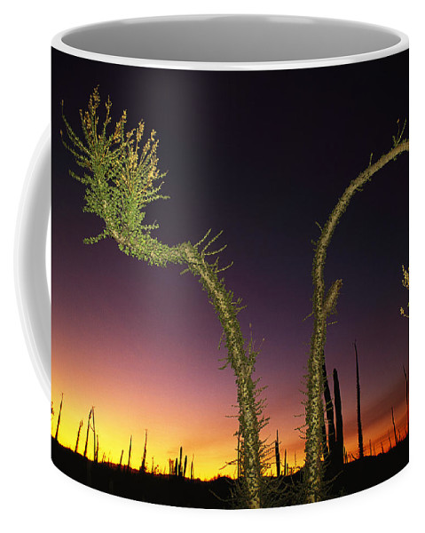 Plants Coffee Mug featuring the photograph A View At Twilight Of A Boojum Tree by Bill Hatcher