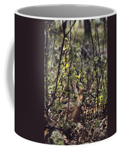 North America Coffee Mug featuring the photograph A Whitetail Fawn Odocoileus Virginianus by Sam Abell