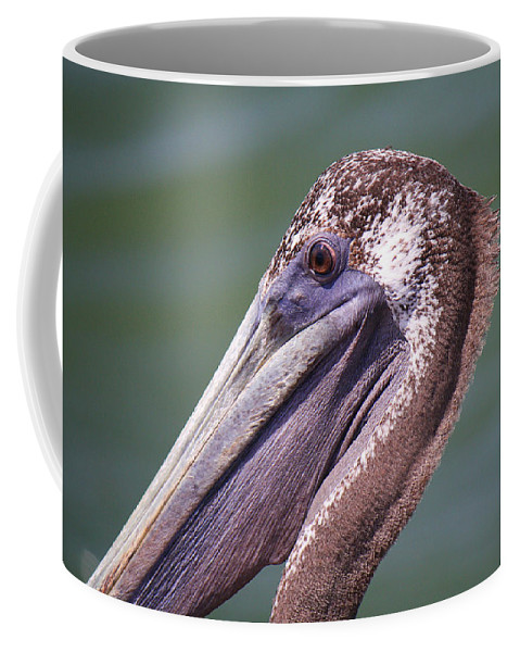 Roena King Coffee Mug featuring the photograph A Young Brown Pelican by Roena King