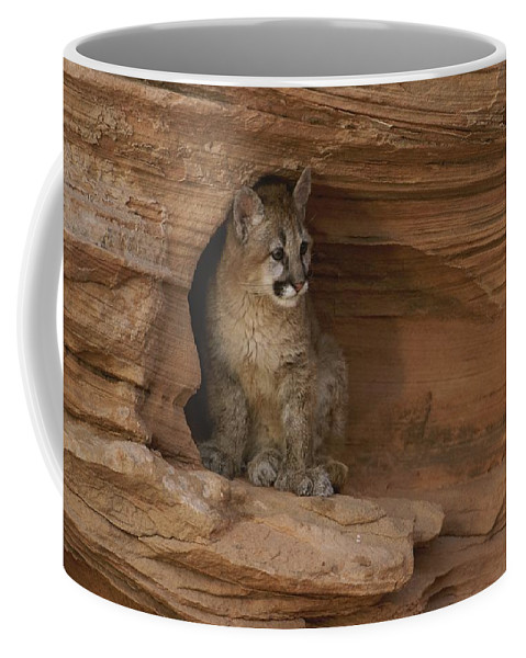 Animals Coffee Mug featuring the photograph A Young Mountain Lion Rests In A Rocky by Norbert Rosing