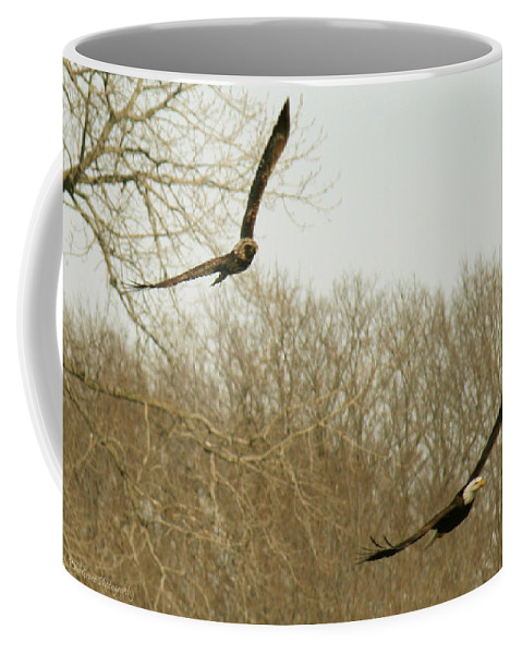 Bald Eagle Coffee Mug featuring the photograph Adult And Immature Bald Eagle Flying by Crystal Heitzman Renskers