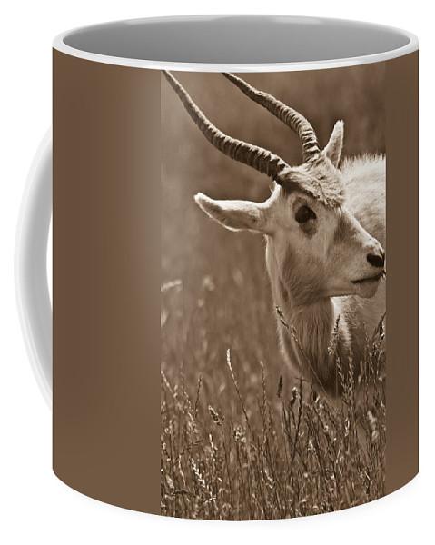 African Coffee Mug featuring the photograph African Grassland Feeder 2 by Douglas Barnett