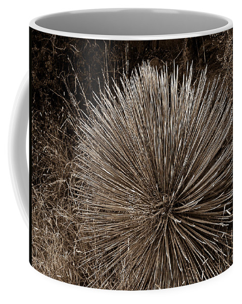 Agave Coffee Mug featuring the photograph Agave 1 by Douglas Barnett