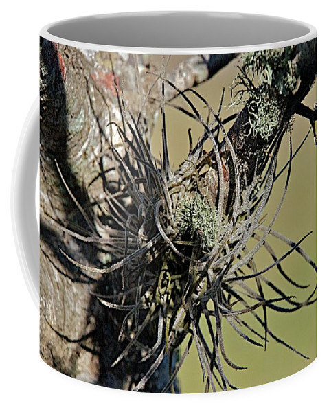 Air Plant Coffee Mug featuring the photograph Air Plant by Joseph Yarbrough