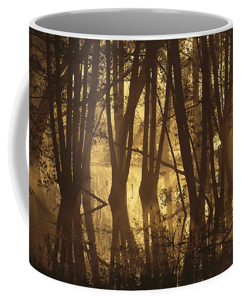 Europe Coffee Mug featuring the photograph Alder Tree Marshland At Sunrise by Norbert Rosing