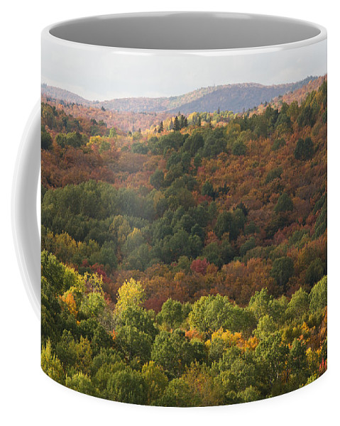 Fall Coffee Mug featuring the photograph Algonquin In Autumn by Cale Best