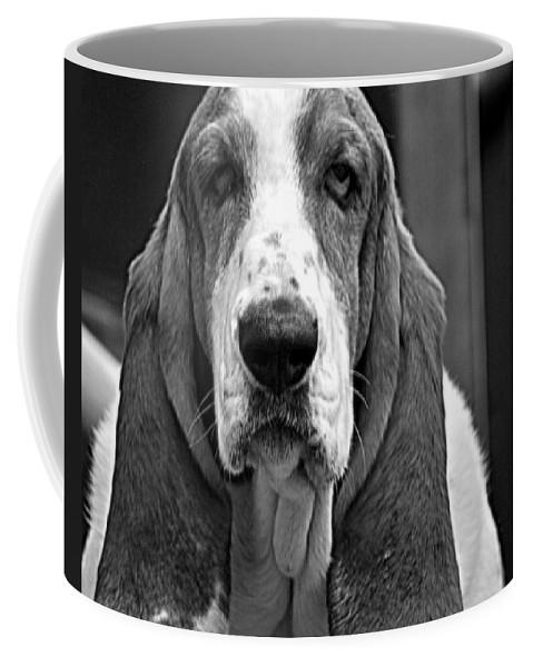 Ears Coffee Mug featuring the photograph All Ears by Marysue Ryan