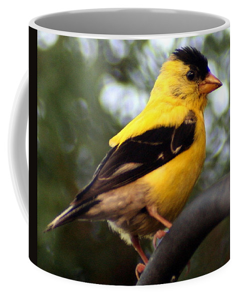 American Goldfinch Coffee Mug featuring the photograph American Goldfinch by Laurel Talabere