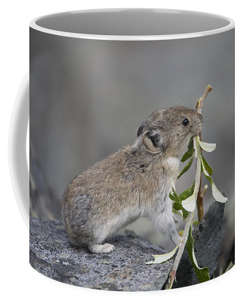 Mp Coffee Mug featuring the photograph American Pika by Michael Quinton