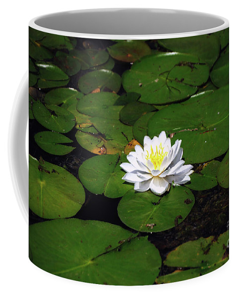 Lily Coffee Mug featuring the photograph American White Waterlily by Ronald Grogan