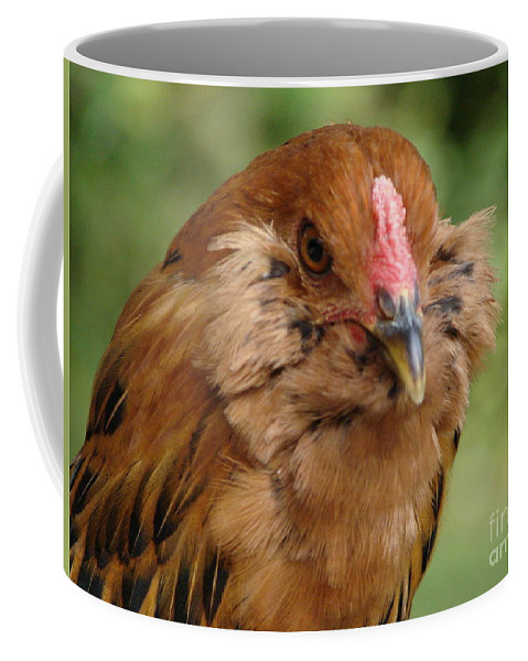 Amerucana Coffee Mug featuring the photograph Amerucana by Priscilla Richardson