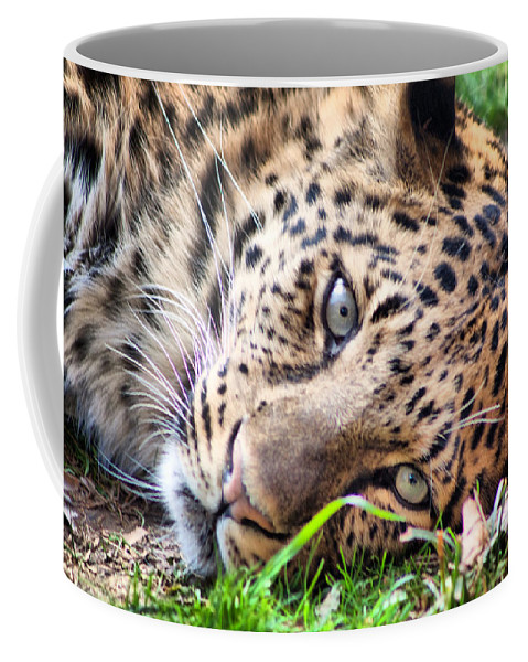 Leopard Coffee Mug featuring the photograph Amur Leopard by Lynne Jenkins