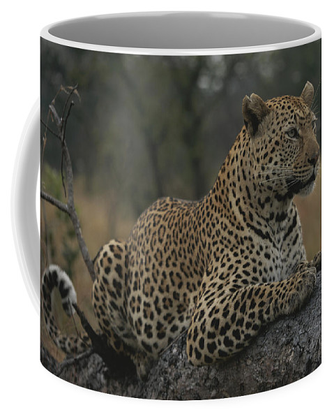 Africa Coffee Mug featuring the photograph An Alert Leopard Rests On A Fallen Tree by Kim Wolhuter