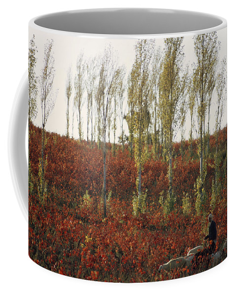 Animals Coffee Mug featuring the photograph An American Bald Eagle In Flight Close by Klaus Nigge
