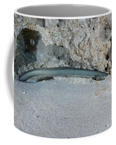 Freshwater Coffee Mug featuring the photograph An American Eel Prowls Along The Edge by Michael Wood