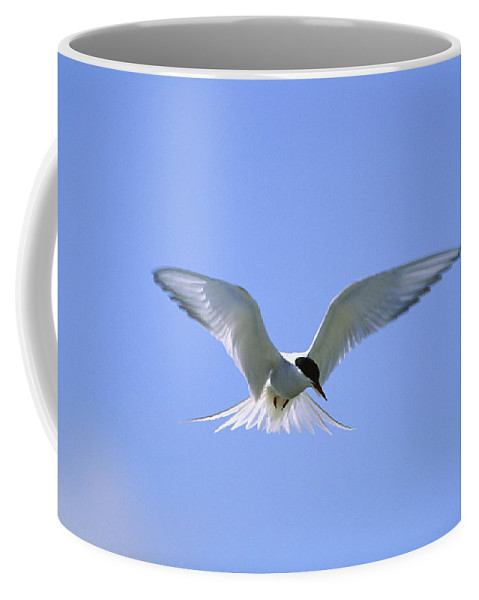 North America Coffee Mug featuring the photograph An Arctic Tern Hovers In by Norbert Rosing