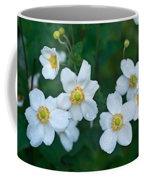 Anemone Coffee Mug featuring the photograph Anemone Cluster 1 by Douglas Barnett